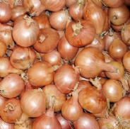 Shallot F1 Ambition - Appx 50 seeds